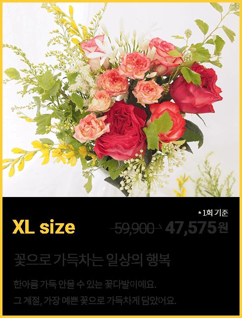 꽃 정기구독 XL 사이즈